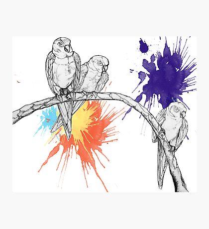Birds2 Photographic Print
