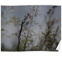 natural grass 1 Poster