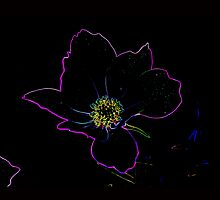 Cosmos Flower Neon by NewfieKeith