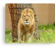 The Lion Canvas Print