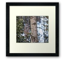 Great Grey Owl in a tree Framed Print