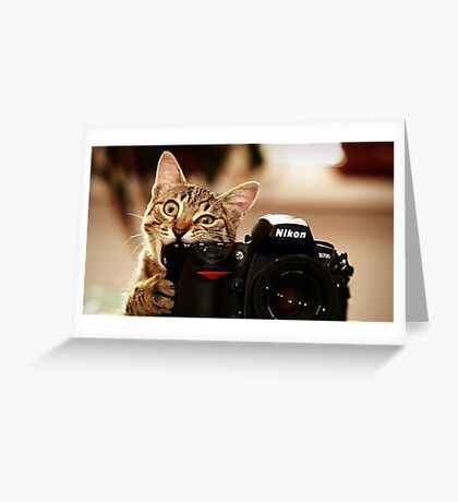 Cat Photographer Greeting Card