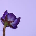 Purple Cat Ears? by rom01