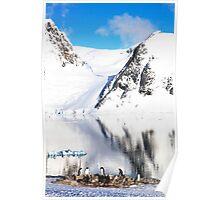 Antartica Penguins Poster