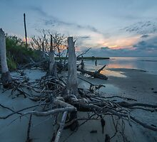 Stumps at Sunset - St. George Island by thatche2