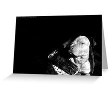 Kiko the Bluenose Pitbull by Byron Croft Photography Greeting Card