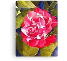 Pink Camellia flower Canvas Print