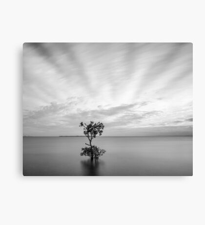 Mangrove Tree at Wellington Point, Queensland, Australia Canvas Print