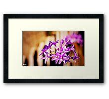Garlic Blossoms by Byron Croft, Croft Photography Framed Print