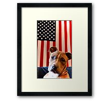 Pitbull for President by Byron Croft, Croft Photography Framed Print