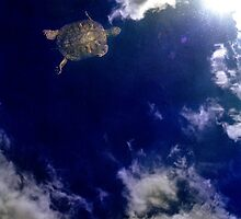Turtle In The Sky With Diamonds by AntonyDeGennaro