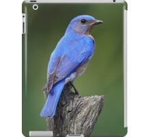 Eastern Bluebird iPad Case/Skin