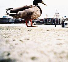 duckzilla by gray79