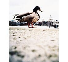 duckzilla Photographic Print