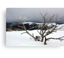 A snowstorm on a mountainside in Australia Canvas Print