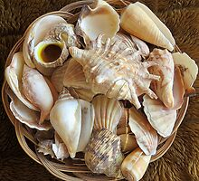 Shells 2 by Carolyn  Fletcher
