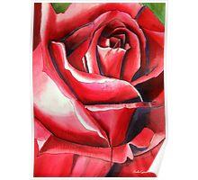 Crimson Glory red rose flower art Poster
