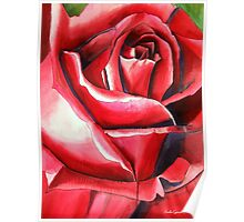 Crimson Glory red rose flower art Poster