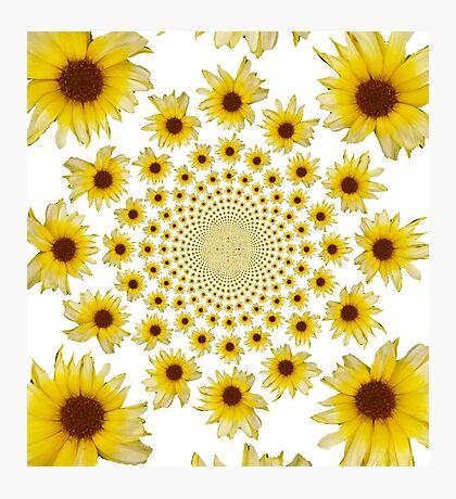 Sunflower Kaleidoscope Design  Photographic Print