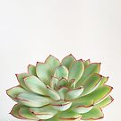 Green Succulent by Cassia Beck