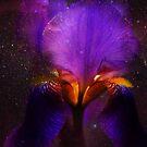 Risen from Stars. Cosmic Iris by JennyRainbow
