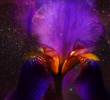 Risen from Stars. Cosmic Iris by JennyRainbow