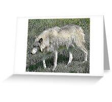 Rexburg Idaho - Timber Wolf Greeting Card