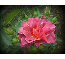 Rosy Outlook Photographic Print