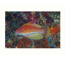 Yellowfin Flasher Art Print