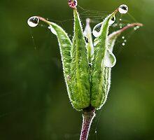 Nature's Coronet  by Susie Peek
