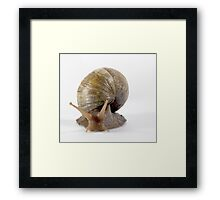 Giant Snail Framed Print