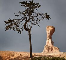 Tree and Queen Victoria, Bryce Canyon National Park, Utah, USA. by Jonathan Maddock
