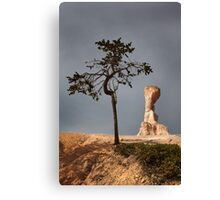 Tree and Queen Victoria, Bryce Canyon National Park, Utah, USA. Canvas Print