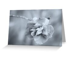 Precious Silver Greeting Card