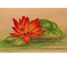 Waterlily - Colored Pencil Drawing Photographic Print