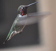 BEAUTY IN FLIGHT 5 by JAYMILO