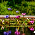 The Lilly Pond by TJ Baccari Photography
