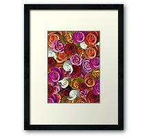 Multi Colored Roses Framed Print