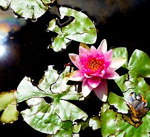 Sun and Lotus by Robert Meyers-Lussier