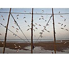 Flying fish Photographic Print