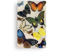 Vintage Butterflies Canvas Print