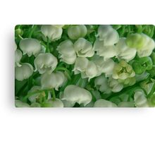 lilies of the valley background Canvas Print