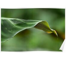 Macro Photograph of Green Leaf Poster