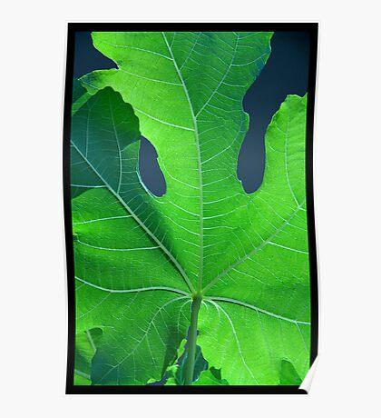 Vivid Green Leaf Veins Poster