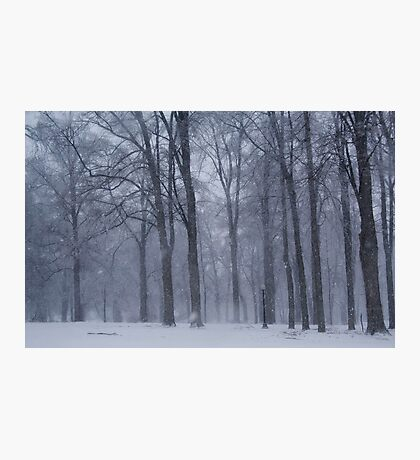Dreamy Snowfall in Woods Photographic Print