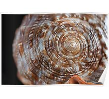 Macro Photograph of Seashell Spiral Poster