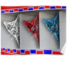 Patriotic Kittens Poster