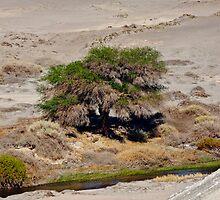 Tree in the Atacama Desert by elisehendrick