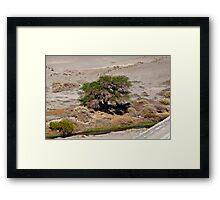 Tree in the Atacama Desert Framed Print
