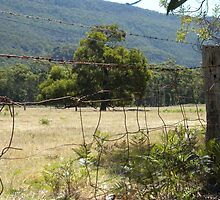Fence in The Grampians_Victoria_Australia by Kay Cunningham